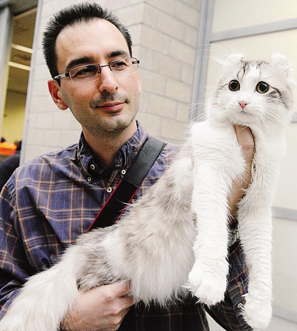 Tutti pazzi per i gatti seimila a villa erba cronaca for Erba per gatti