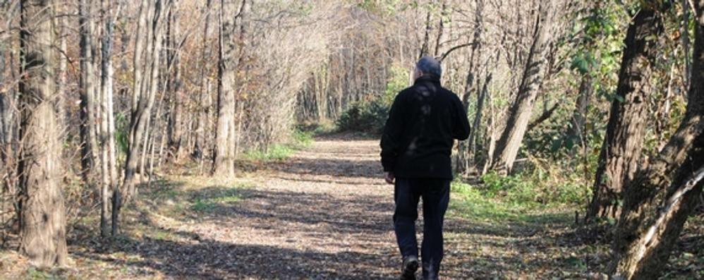 Spaccio nei boschi a Cadorago  «Perché fermarli è quasi impossibile»
