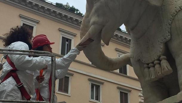 Sfregiato elefantino del Bernini in piazza Minerva a Roma