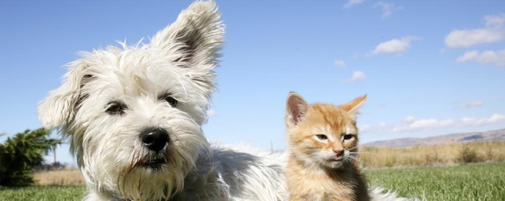 Chi ha un cane in casa più felice di chi ha un gatto - Como città Como