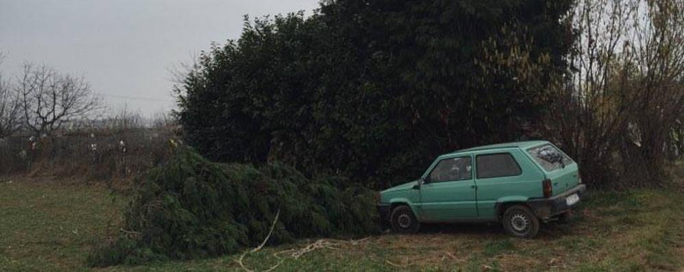 Limido, cade dall'albero  Muore uomo di 44 anni