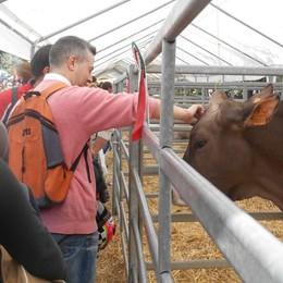 I contadini invadono Appiano  E la fiera fa il record di pubblico