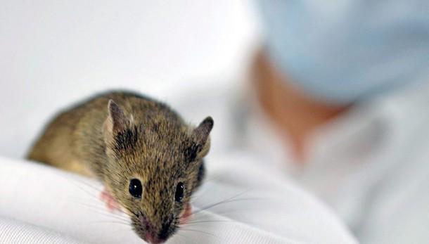 Usa, maxi studio trova nei ratti legame tumori e telefonini