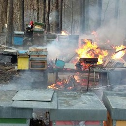 Rogo distrugge le arnie di api Si teme un gesto doloso