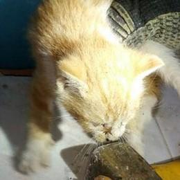 Gattini nell'intercapedine  Salvati a Novedrate