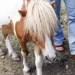 Nuova casa per Ishi  Il pony all'ex albergo Chiara