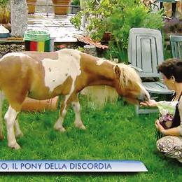 Pony a Magreglio, intesa più vicina  Ma bucano la gomma all'auto della padrona