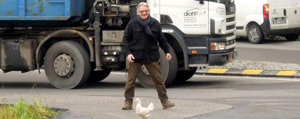 Erba, tutti fermi  La gallina non si sposta