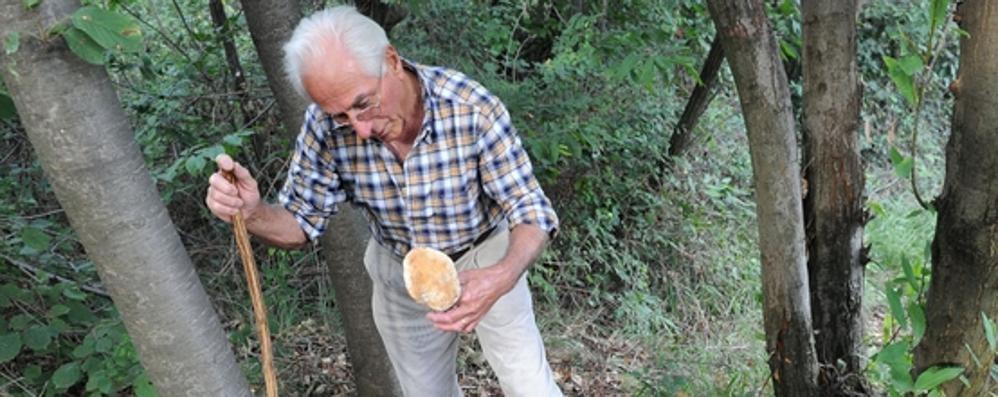 Stagione dei funghi in anticipo  Val d' Intelvi invasa dai cercatori