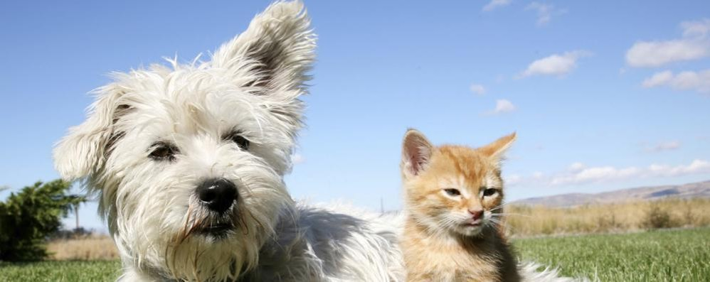 Chi ha un cane in casa  più felice di chi ha un gatto