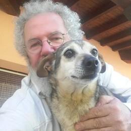 Da Valmorea fino Cittiglio  Ritrovata la cagnolina Quai