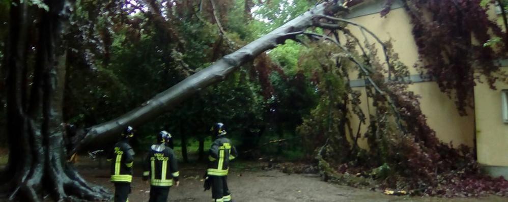 Maltempo, alberi caduti e allagamenti  Albero su scuola elementare a Lomazzo