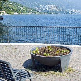 Figuraccia con i turisti  Soltanto a Como  la passeggiata senza  fiori