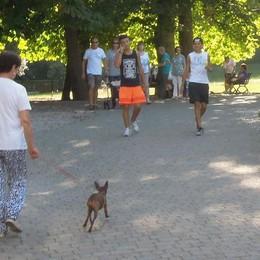 Parchi aperti anche ai cani  Niente fumo in zona giochi
