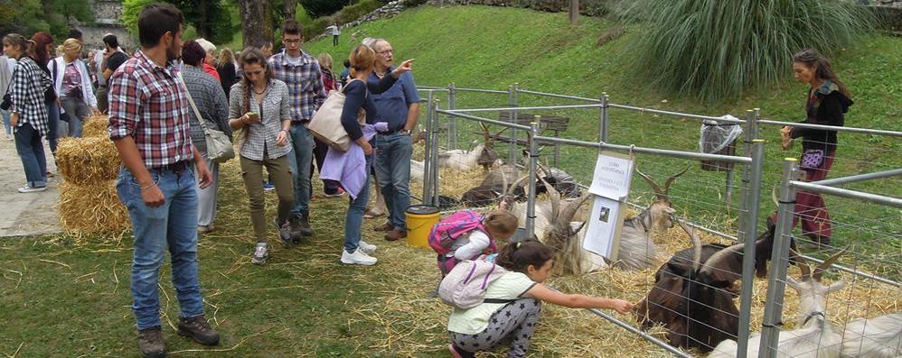 Caslino d'Erba promuove  la nuova fiera delle capre