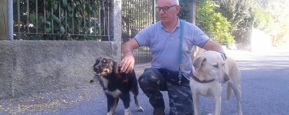 Bianca Cagnolina Salvata A Mariano Ora Aiuta I Ragazzi In