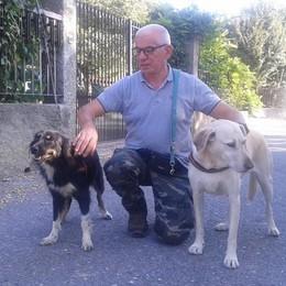 Bianca, cagnolina salvata a Mariano  Ora aiuta i ragazzi in sedia a rotelle