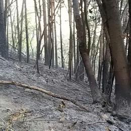 """L'incendio """"dorme"""" nel sottobosco  Tavernerio ora aspetta la pioggia  Il video dei pompieri sul Boletto"""
