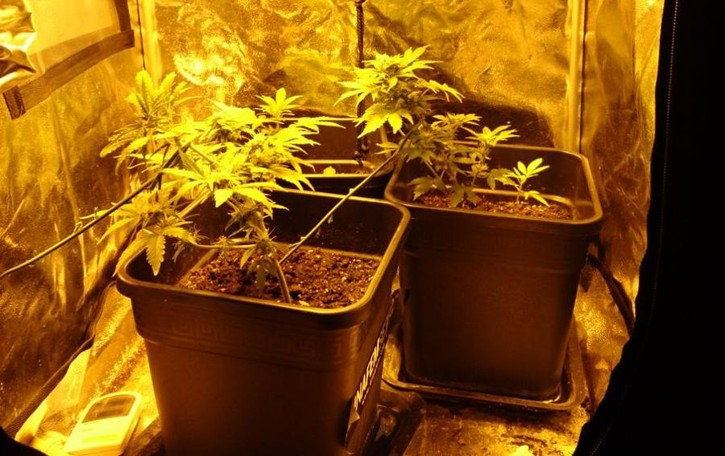 Porlezza, coltivava marijuana  Denunciato giovane di 18 anni
