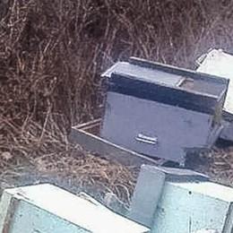 Como, arnie distrutte dai vandali  I produttori ci provano:  «Salvare le api superstiti»
