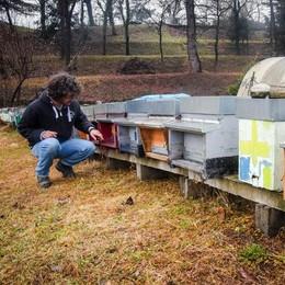 Vandali contro le arnie (video)  Sterminate migliaia di api senza motivo