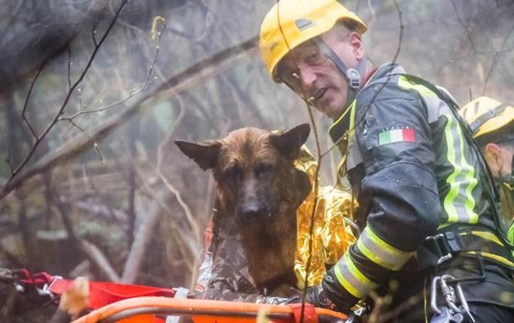 Brunate, cane nella scarpata   Salvato dai pompieri (il video)