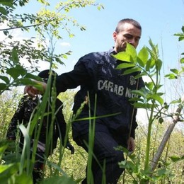 Droga, fermato altro spacciatore   nei boschi di Locate Varesino