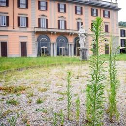 Como, giardini di Villa Saporiti  Ancora invasi dalle erbacce
