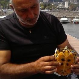 Tartaruga imprigionata nel cantiere Soccorsa e rimessa in libertà