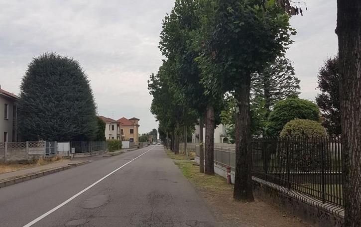Rovello abbatte 21 alberi  «La legna in regalo  a chi li taglia gratis»