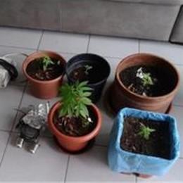 Lipomo, coltiva canapa sul balcone  Denunciato dai carabinieri di Albate
