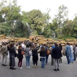 Legno, una festa che cresce  Occhi su Milano e il Salone