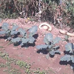 Mariano: «Pulite subito gli orti»  «Ma voi curate meglio i giardini»