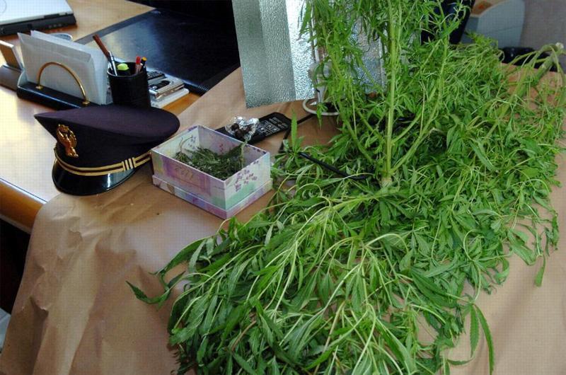 cento-chili-di-marijuana-sequestrati-ad-anzano_1bc80af8-f2b5-11e2-ba2d-8cff31f6de1f_display.jpg (800×530)