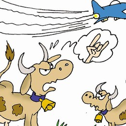 Gli aerei militari si esercitano  «Mucche impazzite per il rumore»