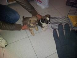Appiano, i due cuccioli