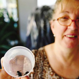 Invasione di scarafaggi  Allarme in via Pino