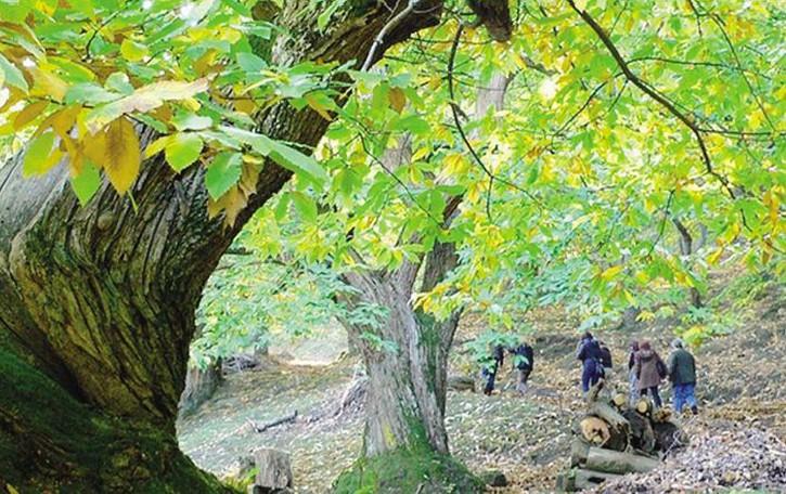 Castagne, il raccolto sarà magro  «Agosto troppo caldo e secco»
