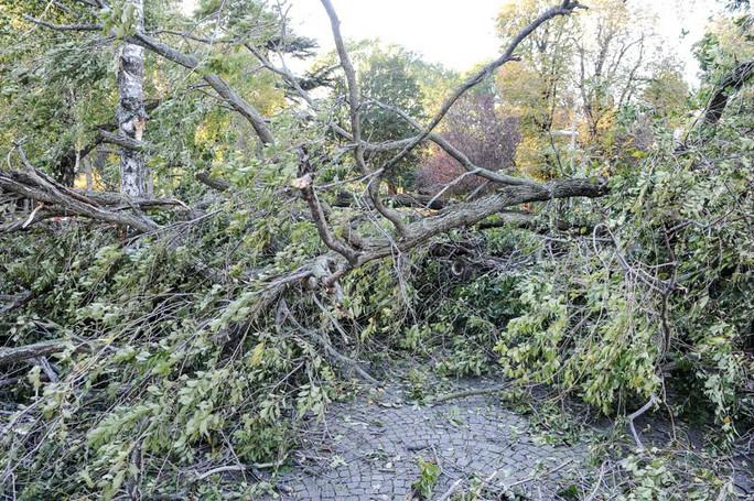 Como vento albero caduto ai giardini a lago
