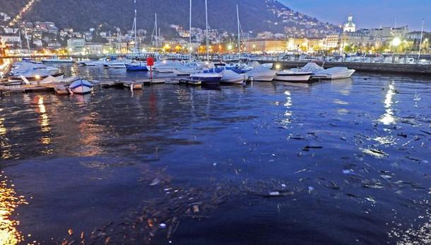Como, tanti turisti e lago sporco  E il battello  rischia la rottamazione