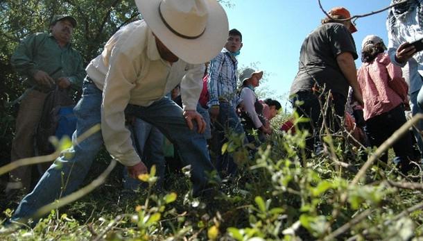 Messico: 11 corpi decapitati in stato Gu