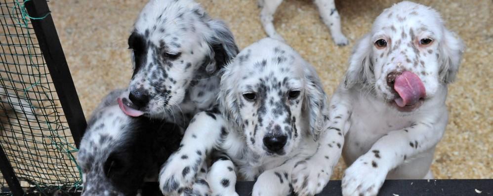 Il cane vivrà più a lungo  Si testa il farmaco anti-age