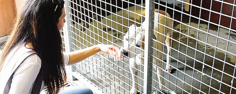 Albate, il canile al collasso  chiede aiuto per Rex