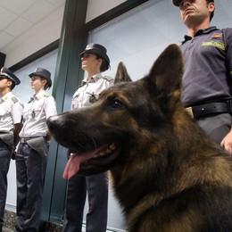 Como, 5 chili di cocaina  Bodyguard finisce in carcere