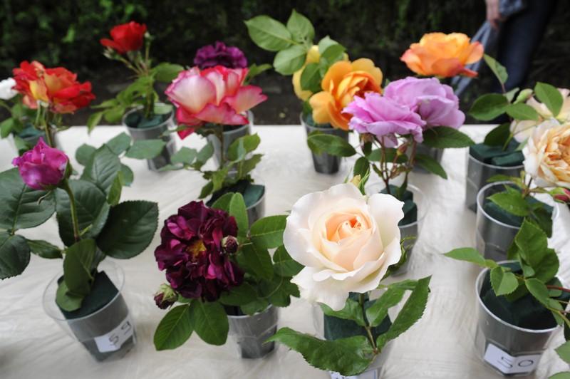 Cernobbio  Concorso Rose