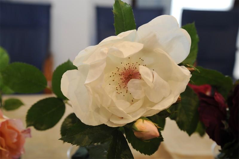 Cernobbio La Rosa Più Bella