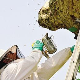 Eupilio, punta da un'ape  Donna finisce all'ospedale