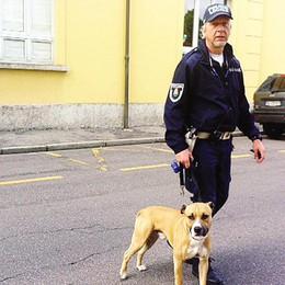 Olgiate, cane fermato dal vigile  Padrone rintracciato e multato