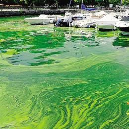 Alghe in ritardo, turisti felici  «E migliora la salute del lago»