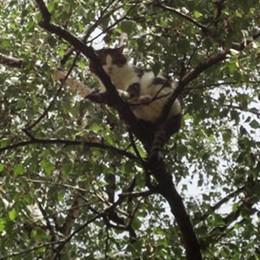 Gatto scivola dal balcone  Appeso a un ramo a 11 metri